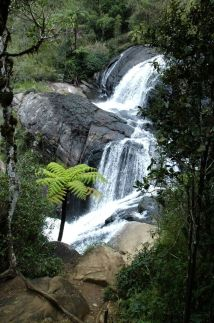bakers falls near tea estate